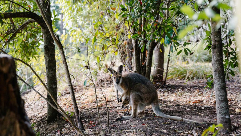 destination-scenic-rim-wallaby-ridge-retreat-accommodation