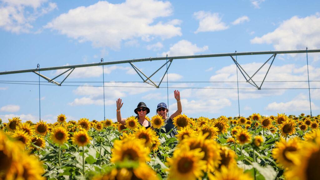 Destination Scenic Rim Scenic Rim Flower Farm